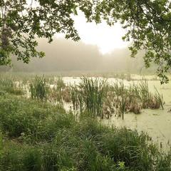 Утро на лесном озере