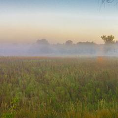 Туман біля Ворзеля