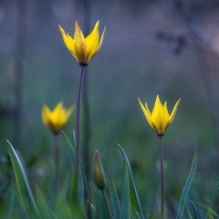 Весна в Самарському лісi