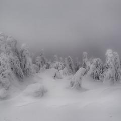 Ёлки скованные льдом