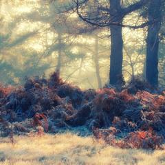 Морозний ранок