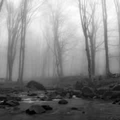 Туманна тиша