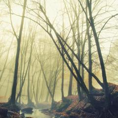 Геометрія, туманно-лісова