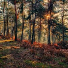 Ранковий ліс