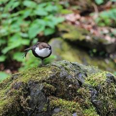 Пташиний баланс