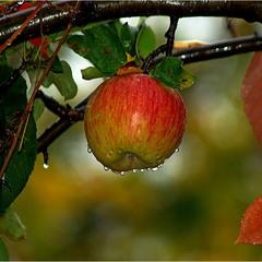 про яблочко