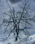 Зима продержалась целую неделю