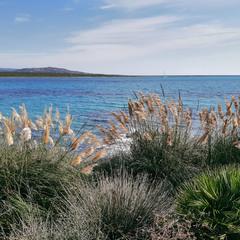 Воспоминания о Сардинии