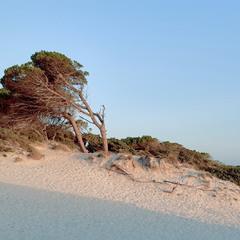 Про що шепочуть дюни
