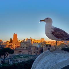 Чайка над Римом