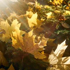 Листья желтые, скажите что вам снится