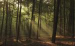 Однажды утром в лесу