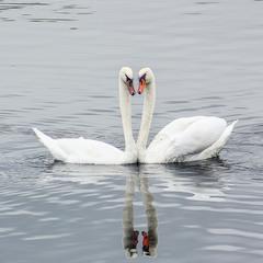 Любовная пара на воде