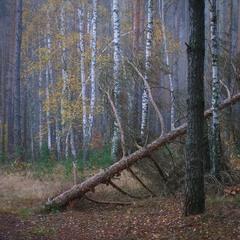 Мої аматорські фотозамальовки.Ранковий осінній ліс.