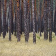 Мої аматорські фотозамальовки.Похмурий осінній ліс.
