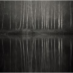 Мої аматорські фотозамальовки.Березовий ліс на березі озера.