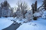 Сніжинки грали і зоріли над смутком тихого чола...