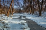 Зимовий ліс ще спить під білим снігом. Дрімають сосни,граби і дуби...