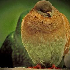 Одинокий птиц