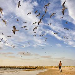 Чайки на тель-авивской набережной