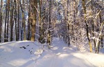 В сонячному лісі