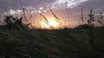 Там, де трави похилі