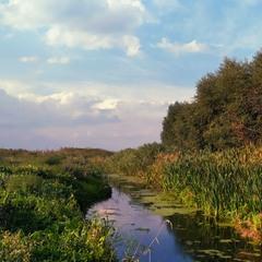 Біля річки