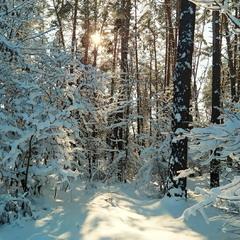 Сонце в лісі