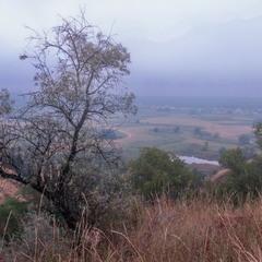 Августовский туман