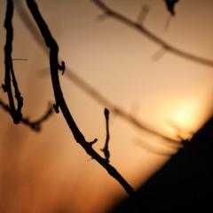 warm evening