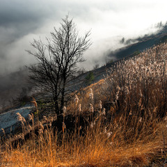 Тут ночують тумани...