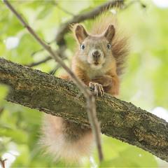 Созрели орехи