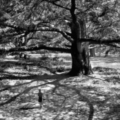 Отрок и дерево