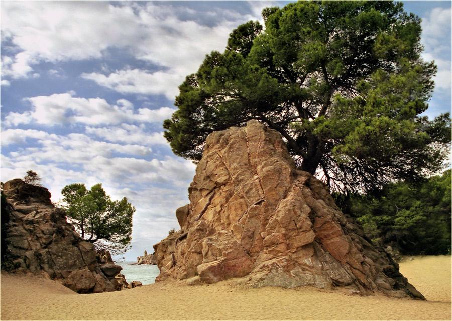 дерево растущее в камне фото средняя школа анализ