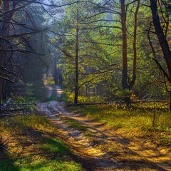 Кольори лісу