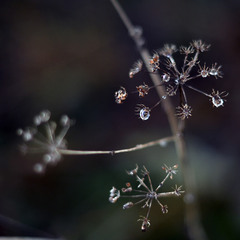 water drops #4