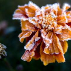 Дыхание зимы.