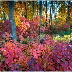 Криворожская осень