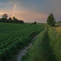 Полями пахнет, — свежих трав...