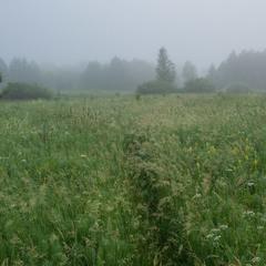Где трав цветущих запах пряный...