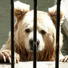 Жил на полюсе Медведь...