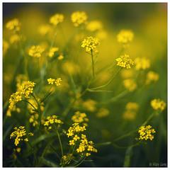 ...Amarelo...