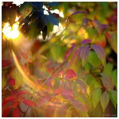 ... Autumn Time ...