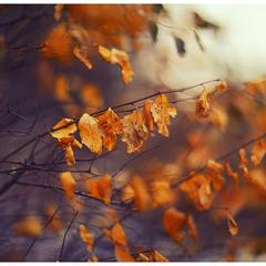 ...Что Такое Осень?...