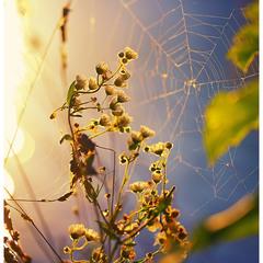 Catch the Sun...