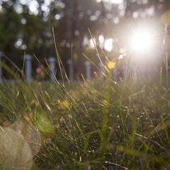 Луч солнца...