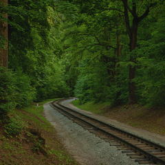 Дорога через лесопарк.