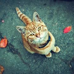 кошачий взгляд...