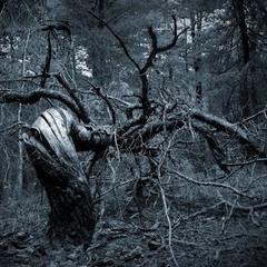 Зловещее дерево...