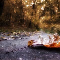 Осень моими глазами..